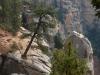 grand-canyon-tree-stands-at-awkward-angle