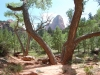 zion-canyon-beyond-tree