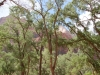 zion-kolob-canyon-through-trees