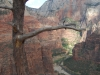 zion-tree-overlooks-canyon