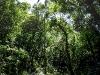 Jamaica - Trees Line Roadside