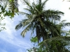 Costa Rican Tree Life