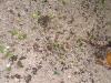 Cahuita - Leaf Cutter Ants