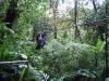 Monteverde - Mike Ziplining