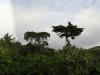 Monteverde - Rainbow