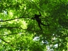Osa - Spider Monkey in Silhouette