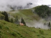 alps-cows-graze-amidst-the-clouds