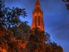 cathedral-rises-into-evening-through-trees