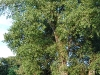 guitarists-under-a-big-tree-in-the-english-garden