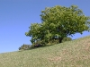 olympianstadtpark-tree-on-hill
