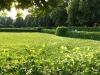 sunset-through-the-trees-in-the-hofgarten