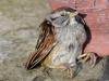 griffins-bird-kill-1