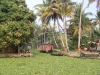 alleppey-life-along-the-canal