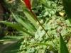 alleppey-long-red-flower
