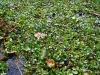 alleppey-plants-on-the-water
