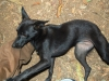 alleppey-stray-dogs-are-everywhere
