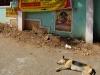 chennai-lazy-dog