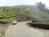 munnar-car-parked-near-cloudy-tea-plants