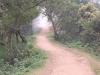 munnar-cloudy-path
