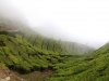 munnar-dipping-tea-field-in-cloud