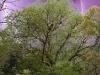 munnar-lightning-behind-jackfruit-tree