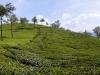 munnar-windermere-super-sunny-rolling-hill