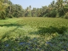 kerala-lone-paddleboat-in-tropical-bog