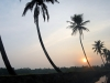 sunset-of-the-curved-palms