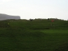the-burren-cows-on-golf-course