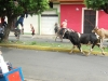 granada-bulls-pass