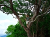 ometepe-captain-mike-in-the-tree