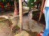 ometepe-deer-in-hostel
