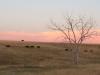 badlands-where-the-black-cattle-roam