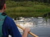boundary-waters-a-beaver-on-our-return-trip