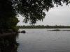 boundary-waters-tree-overhangs-waters-edge