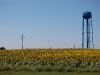 sunflowers-farmhouse-flowers-and-water-tower