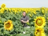 sunflowers-mike-lost