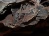 wind-cave-boxwork-close-up