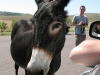 custer-state-park-donkey-says-hello