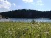 custer-state-park-sylvan-lake-flowers-lake-and-evergreens