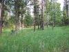 custer-state-park-sylvan-lake-the-hike-passes-a-glade