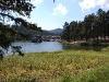 custer-state-park-sylvan-lake-with-foreground-evergreen