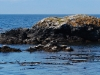 san-juan-islands-seals-lounging