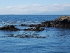 san-juan-islands-seals-on-the-rocks