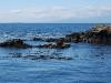 san-juan-islands-seals-on-the-rocks
