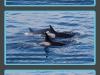 san-juan-islands-three-images-of-three-orcas