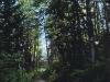 mountain-path-shadowy