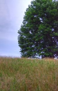 a-single-big-tree