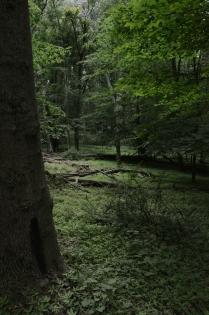 legend-of-zelda-forest