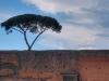 palatine-hills-tree-grows-atop-ruins